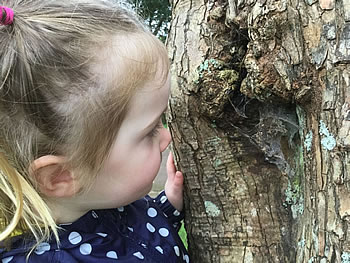 child looking at web on a tree